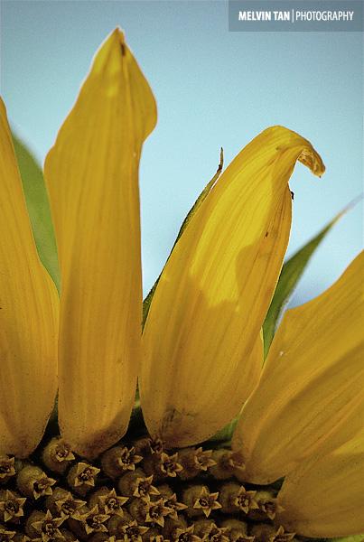 Aug 17 Flora